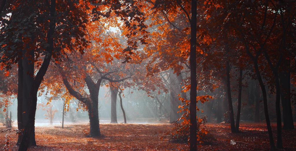 Jesen - fotografije - Page 16 Lightshow_by_ildiko_neer-d86xpkl