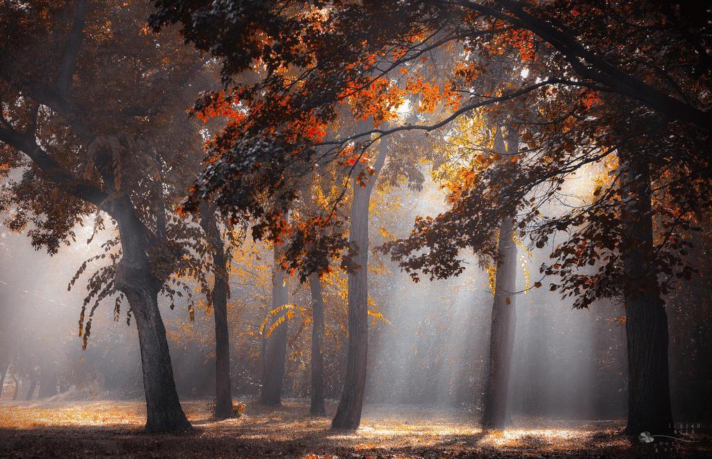 Heaven by ildiko-neer