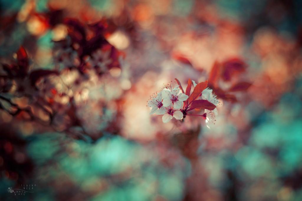Spring Tree by ildiko-neer