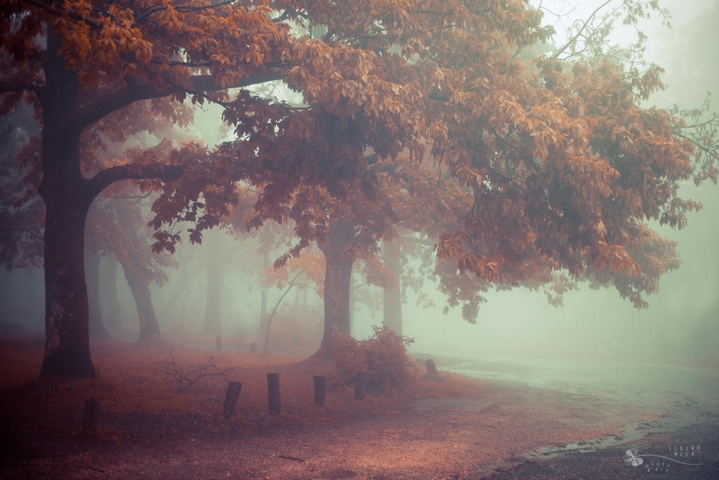 Place for Us by ildiko-neer