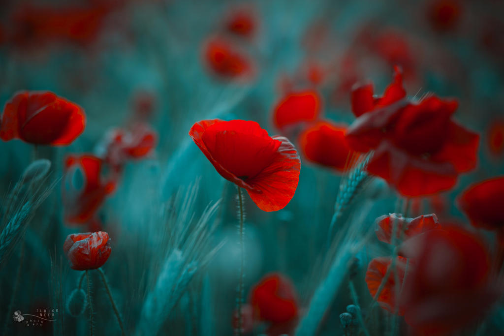 Rebell by ildiko-neer