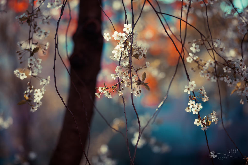 Colorful Spring by ildiko-neer