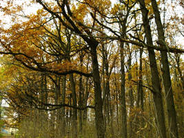 Autumn 6 by Henker144