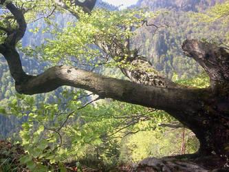 Tempting tree by Salvaa