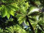 066/365 tree canopy