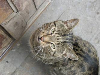 Portrait of Cat by FieryWolf