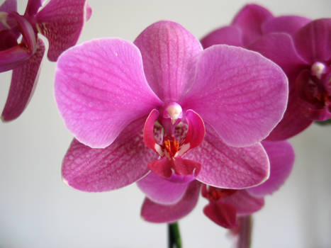 stock.orchid.2