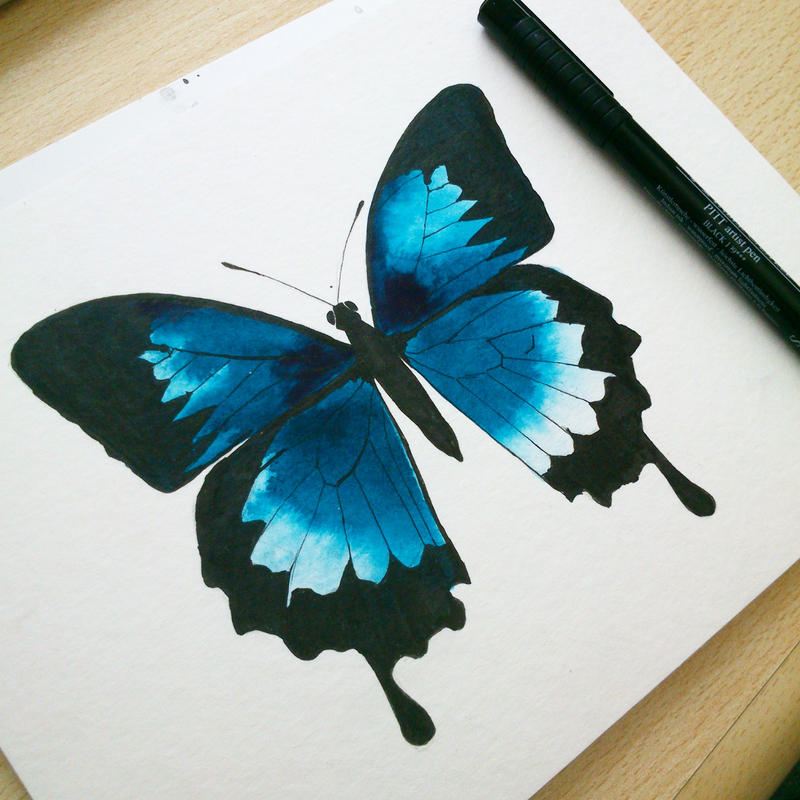 ulysses butterfly by excentric