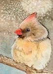 Birdie Mini study 5