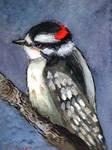 Downy Woodpecker Watercolor