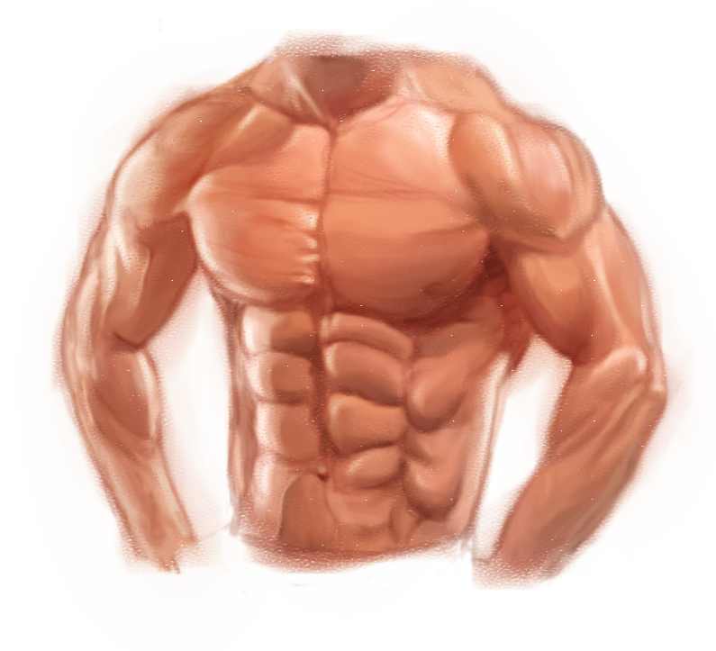 Study Muscles And Anatomy Of Male Upper Body By Playzgamer On Deviantart