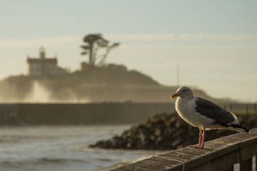 Lighthouse at Crescent Beach, CA by BellusTerra