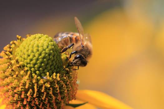 Bee sunny