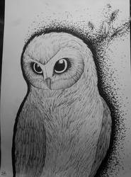Just an Owl