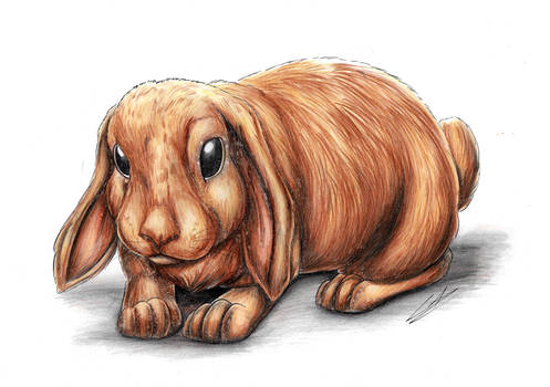 :COMM: Little Bunny