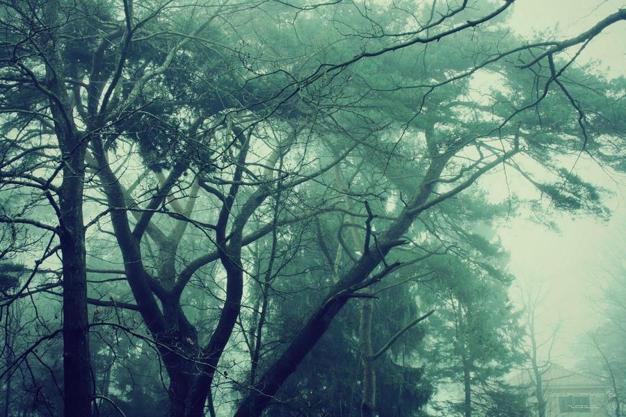 Fog by Sangvinar