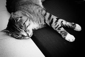 Cat_01 by Sangvinar
