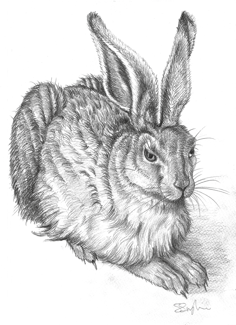 Hare (after Durer) by seanser