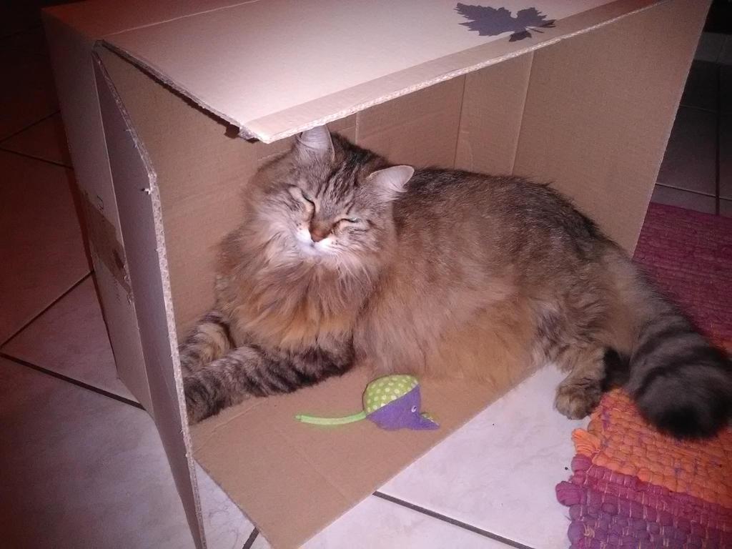 Little angel in a box by manamanou