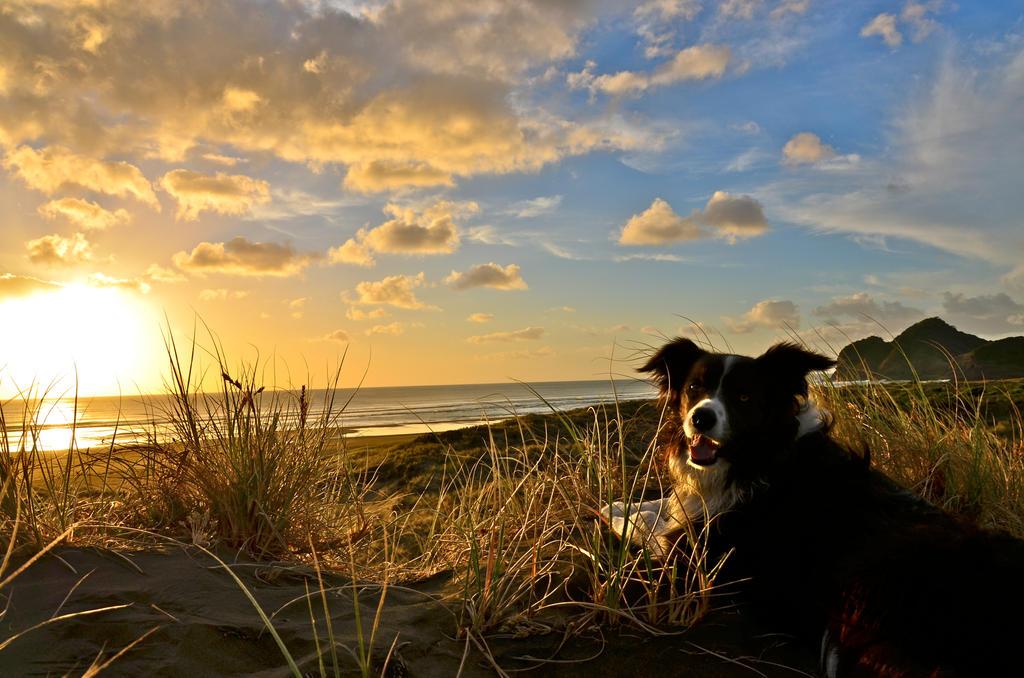 Dogs life by Aotearoa-Westie