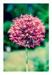 Springtime 6 by agnesvanharper