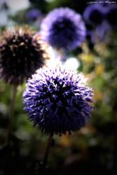 Botanic Garden 2 by agnesvanharper