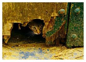 Cat by elessar120605