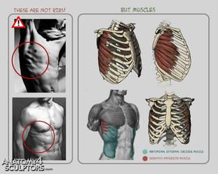 Anatomy for Sculptors 4 by anatomy4sculptors