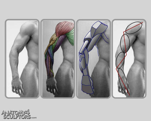 Anatomy for Sculptors 27