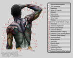 Anatomy for Sculptors 9