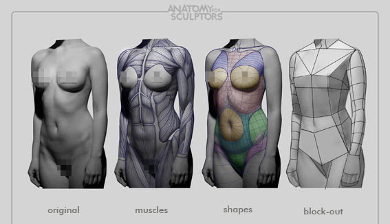 Female body deconstructed