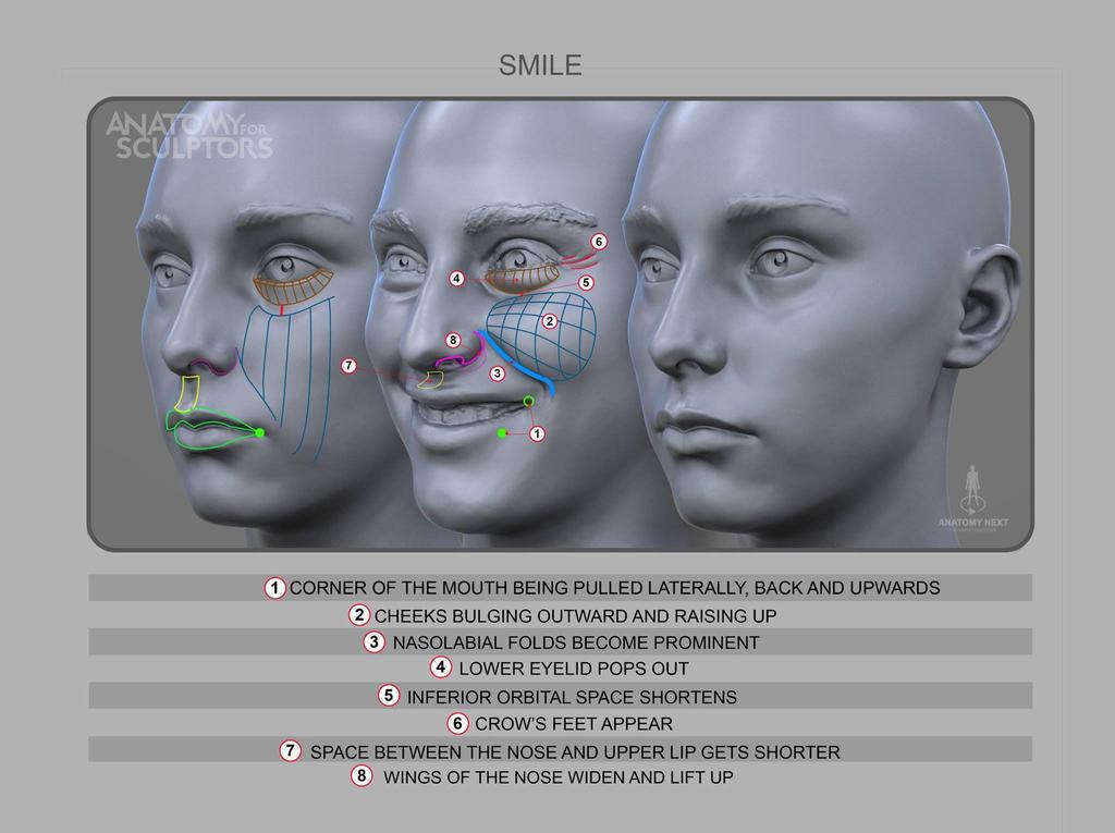 Anatomy of Smile by anatomy4sculptors on DeviantArt