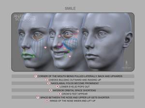 Anatomy of Smile