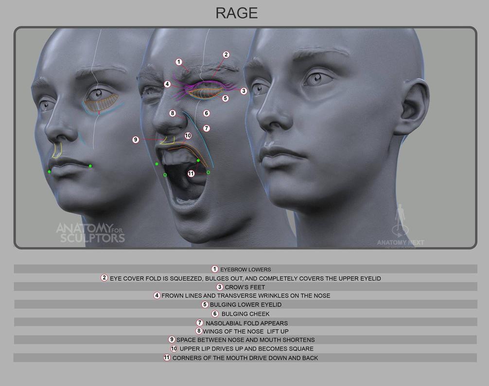 Rage by anatomy4sculptors on DeviantArt
