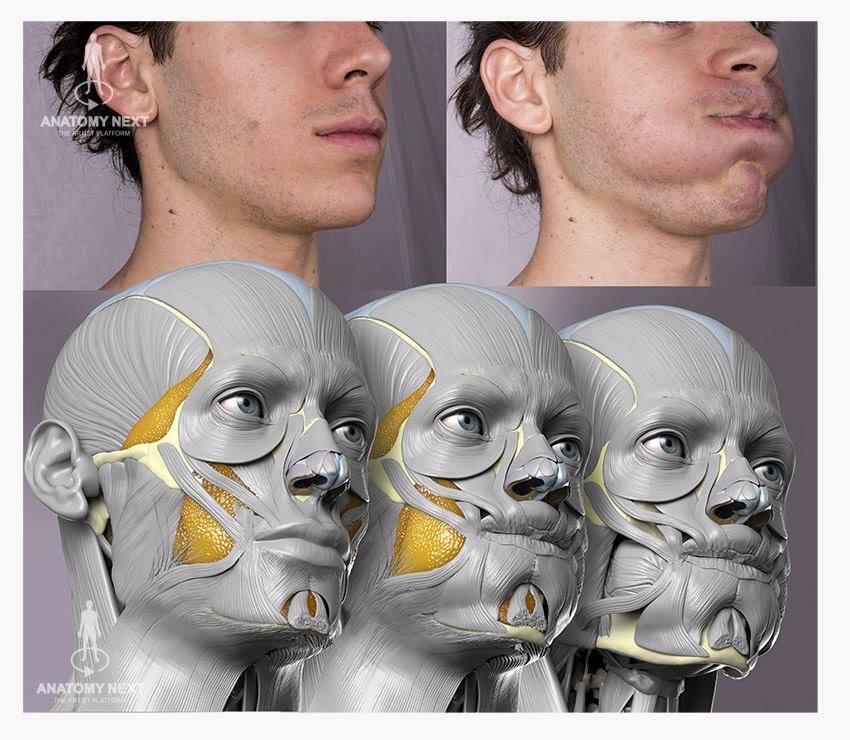 Action unit-33 (Cheek blow) by anatomy4sculptors on DeviantArt