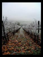 Biran's vine - Christmas 2006 by GeoffroyVincens