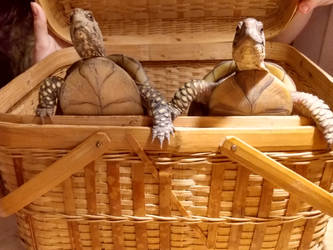 Turtle Sisters and a Basket
