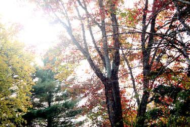 Nature HW#1 by geekypandaphotobox