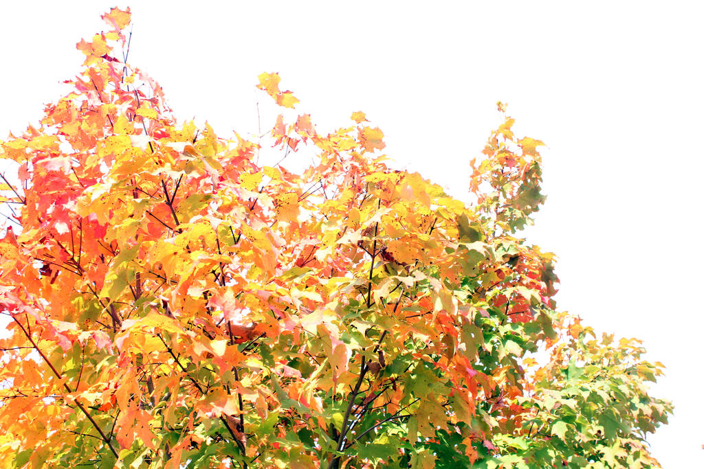 Nature HW#2 by geekypandaphotobox