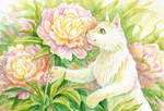 White cat smelling peonies