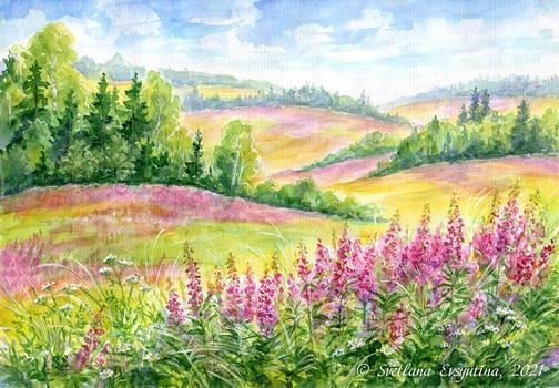 Fireweed fields