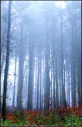 Misty Forest by Erikdevolve