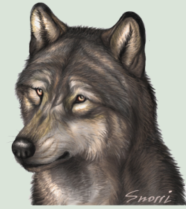 Red-eyesWolf's Profile Picture