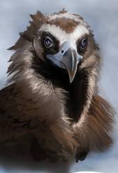 Black Vulture Speedpaint by LuckyLemontina