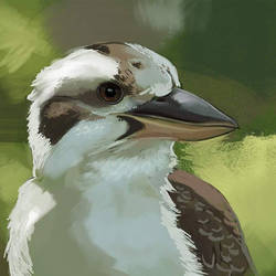 Kookaburra by LuckyLemontina