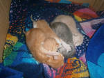 One day old kittens sleeping