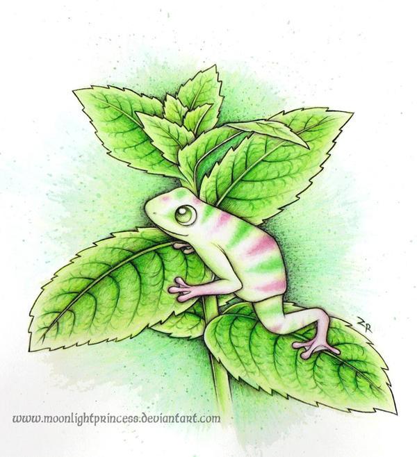 Peppermint Frog by MoonlightPrincess on DeviantArt