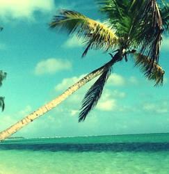 Palm Tree by Shegogirl11