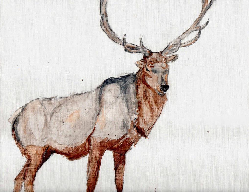Elk by KeraJoan
