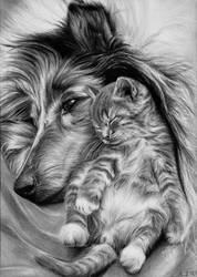Dog and cat by tajus